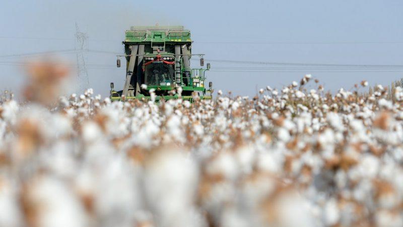 """""""Boicotes"""" ao algodão de Xinjiang prejudicam direitos dos consumidores, diz associação chinesa"""