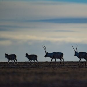 Nova pesquisa revela maior biodiversidade e novas espécies no Tibet
