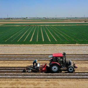 China estabilizará produção de grãos e garantirá segurança alimentar