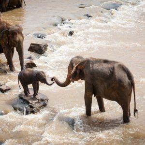 Manada de elefantes migratórios da China continua vagando no sudoeste